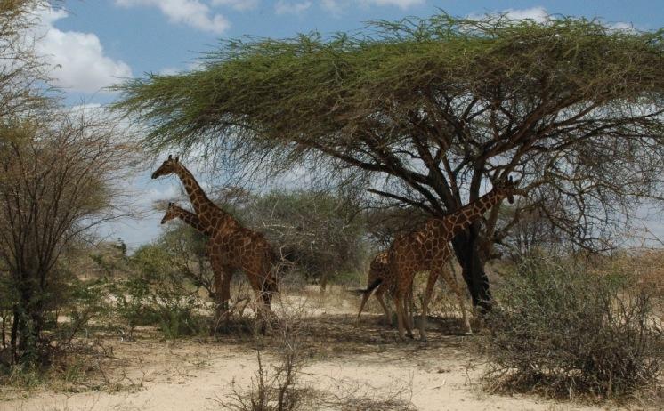 Garissa Giraffe Sanctuary