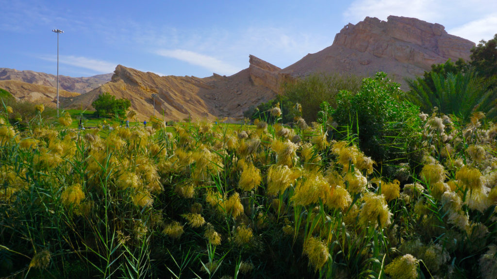 Al Ain - the Green Mubazzarah.  An artificial oasis by the foot of Jebel Hafeet
