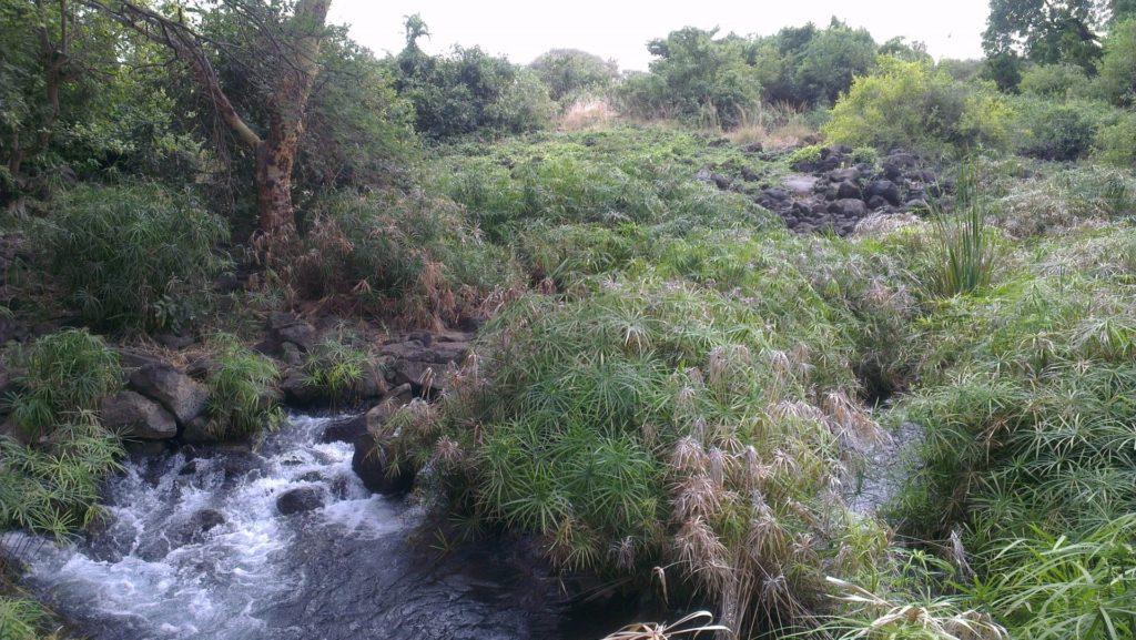 Mzima Springs, in Tsavo National Park