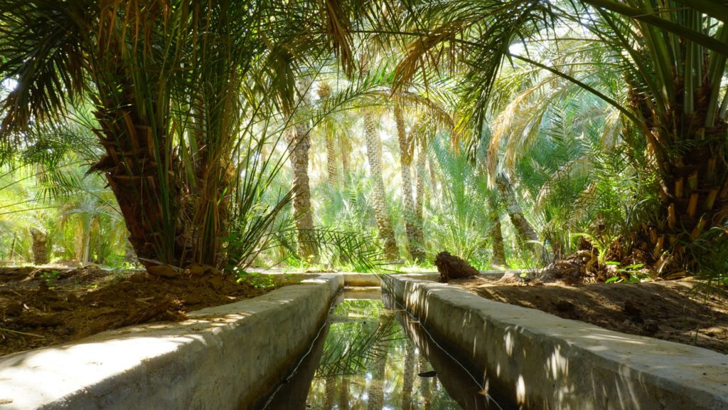 Al Ain Oasis - a green, lush haven in the desert